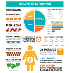 Pregnancy nutrition infographic vector image vector image