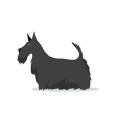 Scottish Terrier Aberdeen Terrier Scottie Breed vector image