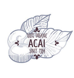 Acai brazilian organic food and ingredients vector