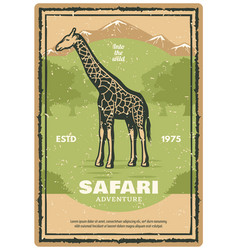 african safari retro banner with giraffe animal vector image