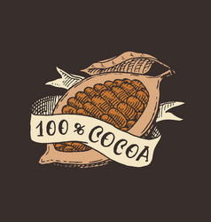 cocoa fruit and ribbon beans or grains vintage vector image
