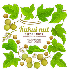 Kukui plant elements set on white background vector
