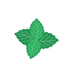 Mint leaves Four green mint leaves color symbol vector image