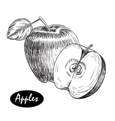 Hand drawn apple vintage sketch style vector