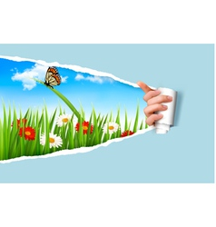 Summer background with flowers grass and a ladybug vector image vector image