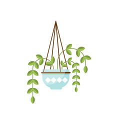 epipremnum house plant indoor flower in pot vector image