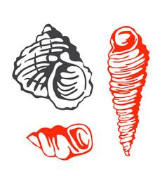 Sea marine shells hand drawn sketch vector