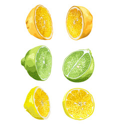Fruit set with lime orange and lemon in halves vector