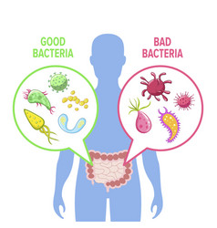 Human intestinal flora vector