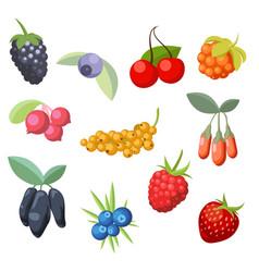 Set various stylized ripe fresh berries berry vector