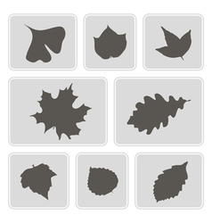 monochrome icons with different leaves vector image