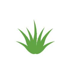 Aloe vera icon design template isolated vector
