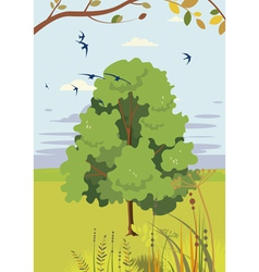 Blossoming linden summer landscape vector