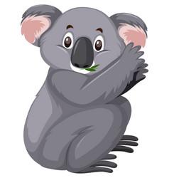 Cute koala eating leaves on white background vector