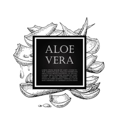 Hand drawn botanical Aloe Vera vector