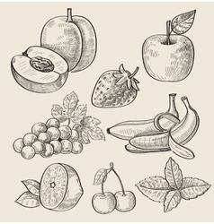 Hand drawn fruit vector
