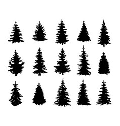 silhouettes of a pine trees vector image