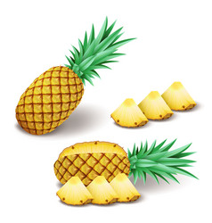 bright realistic pineapple with slices pieces vector image