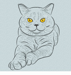 British blue cat with yellow eyes vector