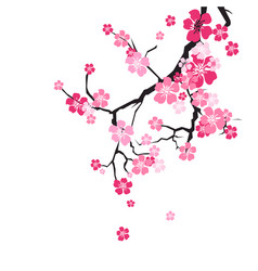 Cherry blossom background sakura flowers pink on vector