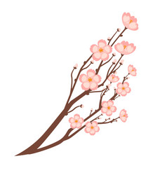 colorful close up sakura branch isolated on white vector image