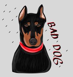 Dog doberman portrait vector