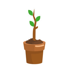 plant in a pot icon vector image