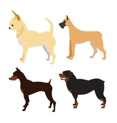 Purebred dogs set vector