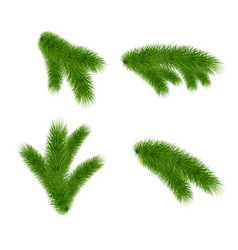 set of fir branches on white background vector image
