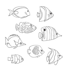 tropical fish icon set isolated triggerfish vector image