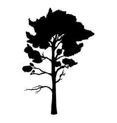 black silhouette pine tree vector image