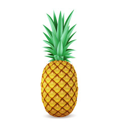 bright realistic pineapple isolated on white vector image