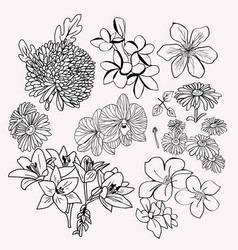 collection floral botanical set monochrome vector image