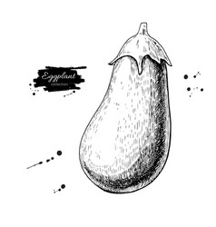 eggplant hand drawn isolated vector image