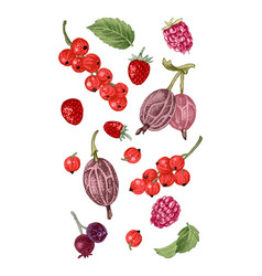 Hand drawn berries on white background vector