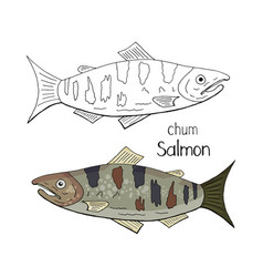 hand drawn chum salmon black and white and color vector image