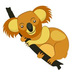 koala bear on tree branch vector image