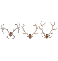 Set different deer antlers vector