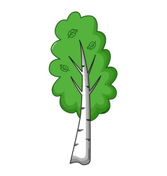 Birch tree icon cartoon style vector