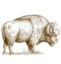 Etching bison vector