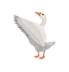 Gray goose standing with open wings side view vector