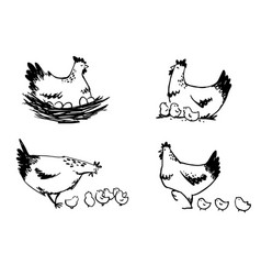 set hens with chicks and hen sitting on eggs vector image