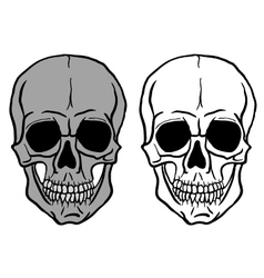 Set of Human Skulls - vector image