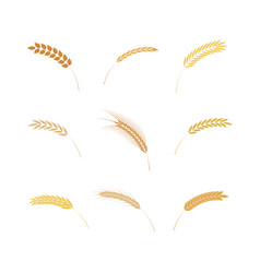 set of simple cereal ears vector image