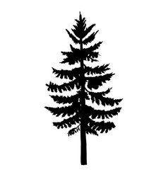 single black silhouette spruce vector image