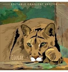 Wild Cats Cougar vector image