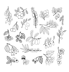 Set of garden and wild hand-drawn sketch berries vector image