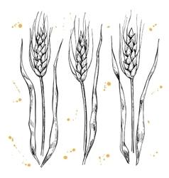 Hand drawn wheat ears set vector