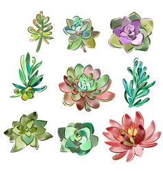 set of floral elements in a watercolor vector image