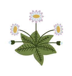 Decorative isolated daisy vector